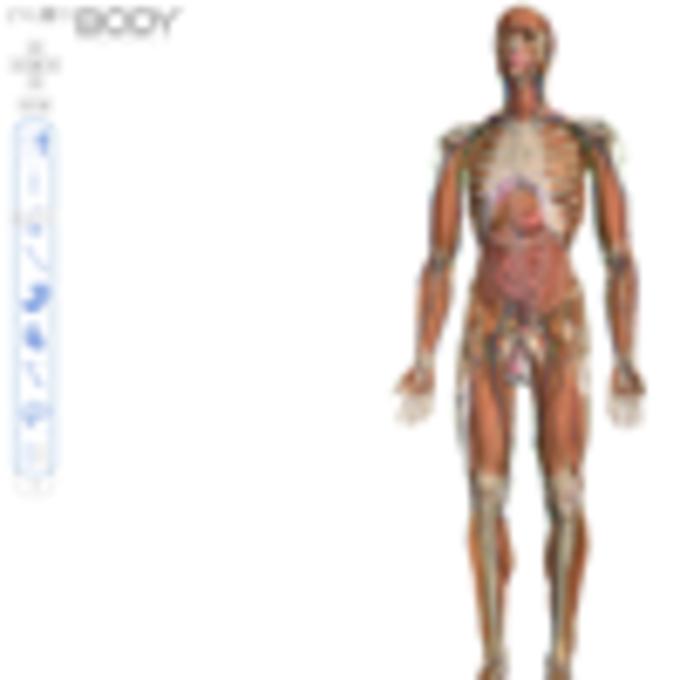 Zygote Body