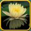 Water Lilies Live Wallpaper