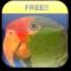 Translating Parrot