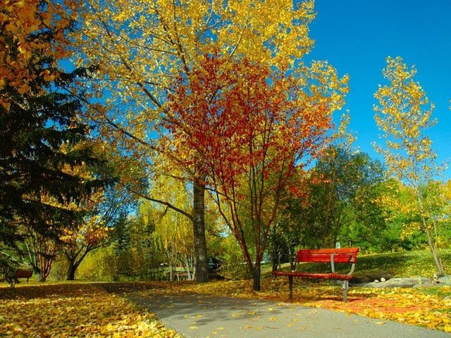 Autumnal Colors Free Screensaver