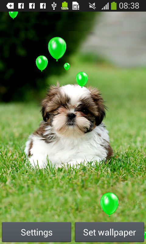 Puppies Live Wallpapers