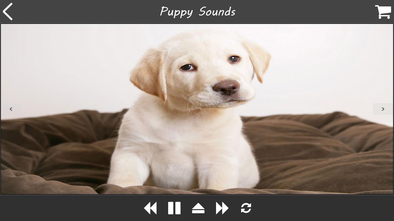 Puppy Sound Dog Spa music-radio