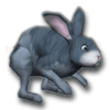 3D Desktop Bunny Rabbits Screen Saver 1.0