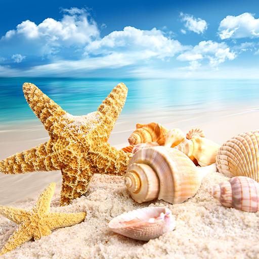 Seashells Live Wallpapers