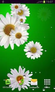 Daisy live wallpaper