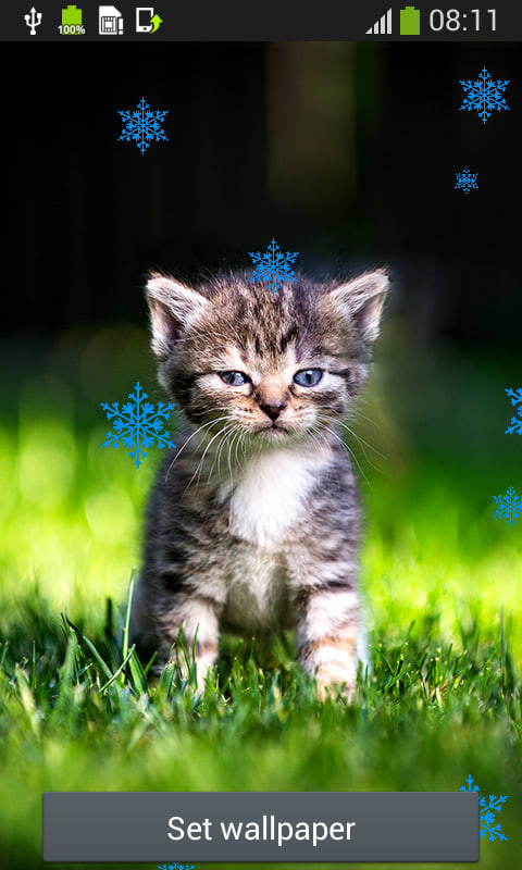 Cat Live Wallpapers