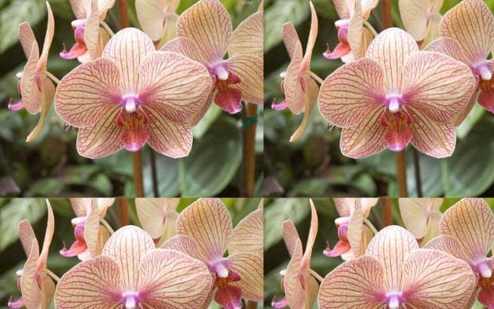 Orchid Screensaver