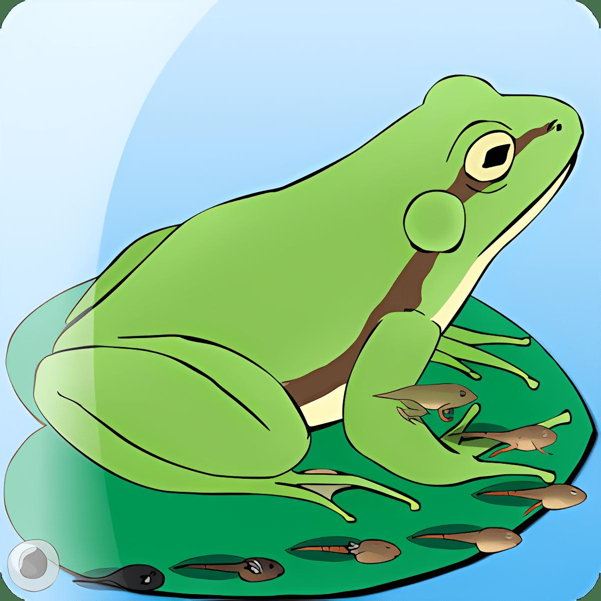 My Pet Frog