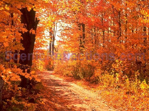 Colors of Autumn Free Screensaver