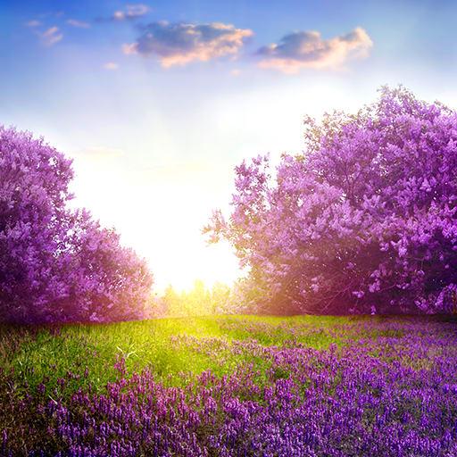 Lavender Live Wallpapers