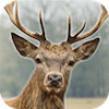 Deer Hunter: 3D Sniper Shooter