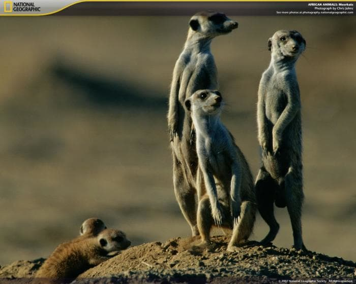 National Geographic African Animals Screensaver