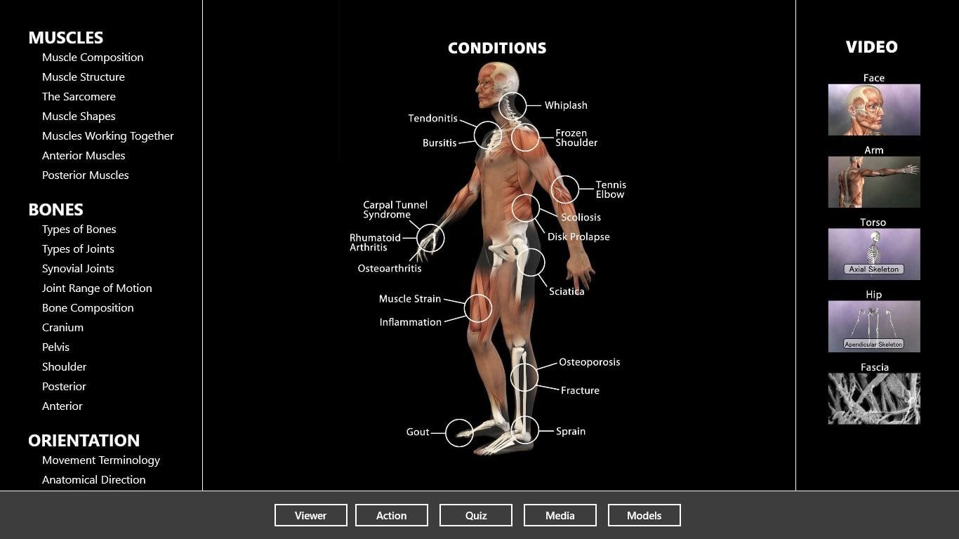 3d anatomy program