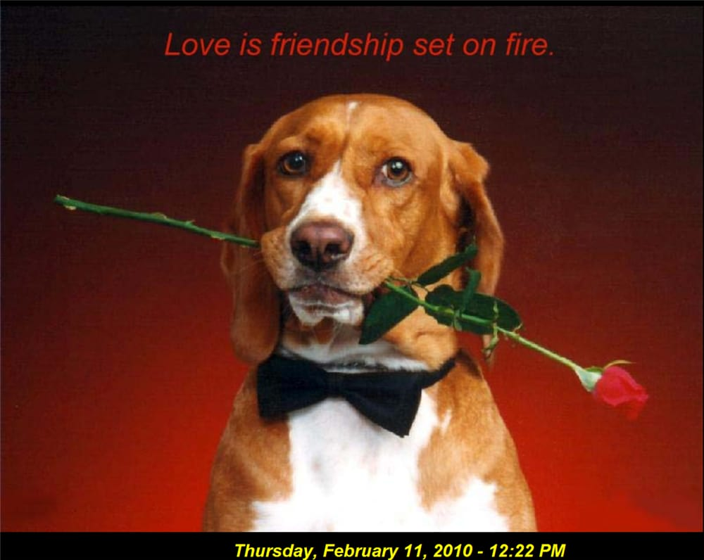 A Valentine Wish Screensaver