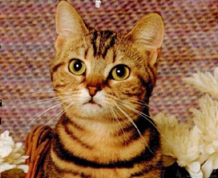 Cat Lovers ScreenSaver
