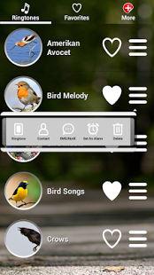 Cantos de Aves