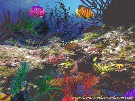 3D Angel Fish Screensaver