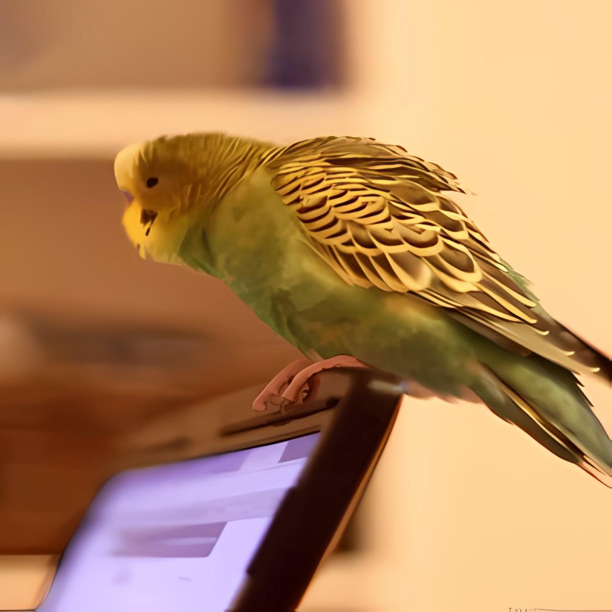 Parrot on Laptop Free LWP