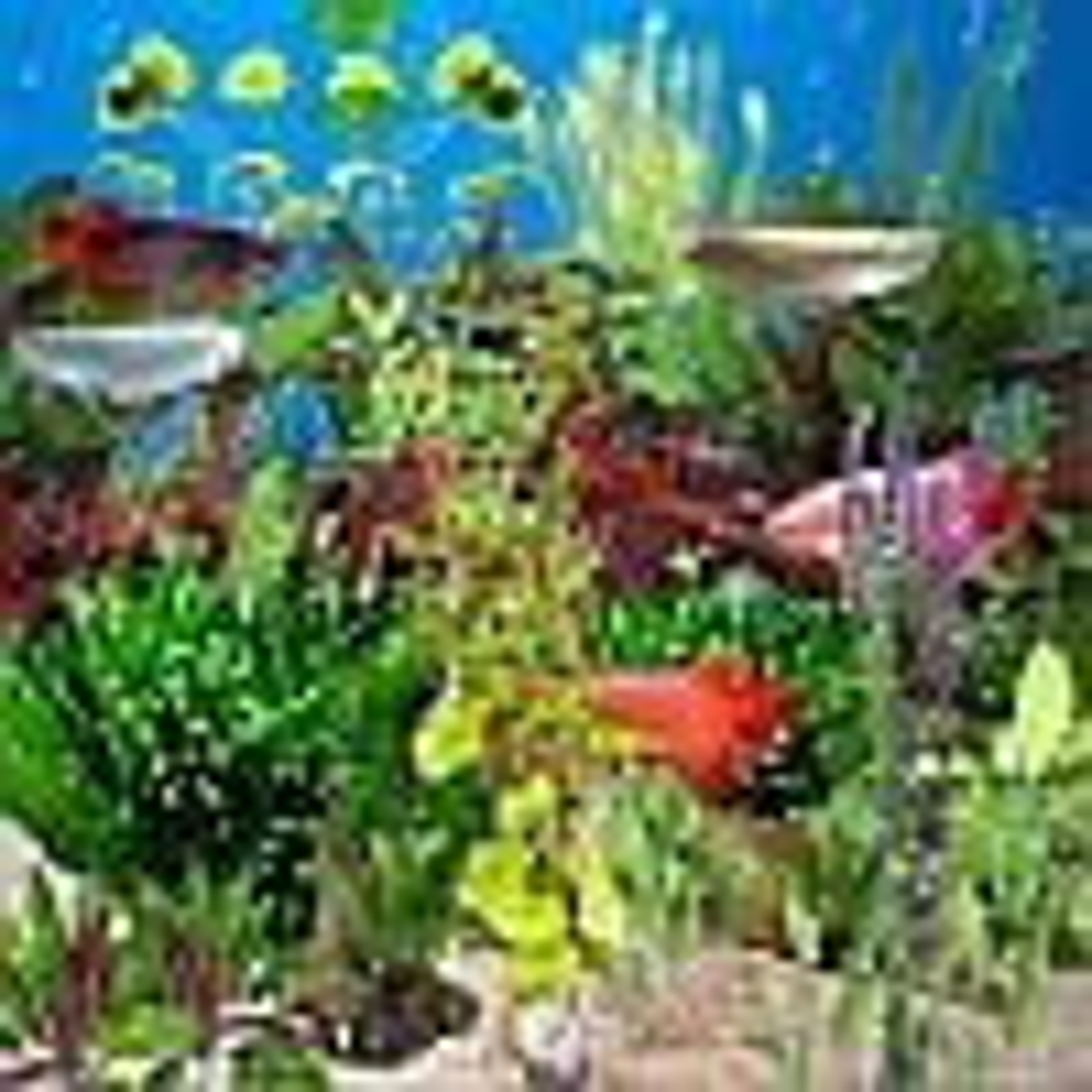 Arowana Deluxe Aquarium 1.03