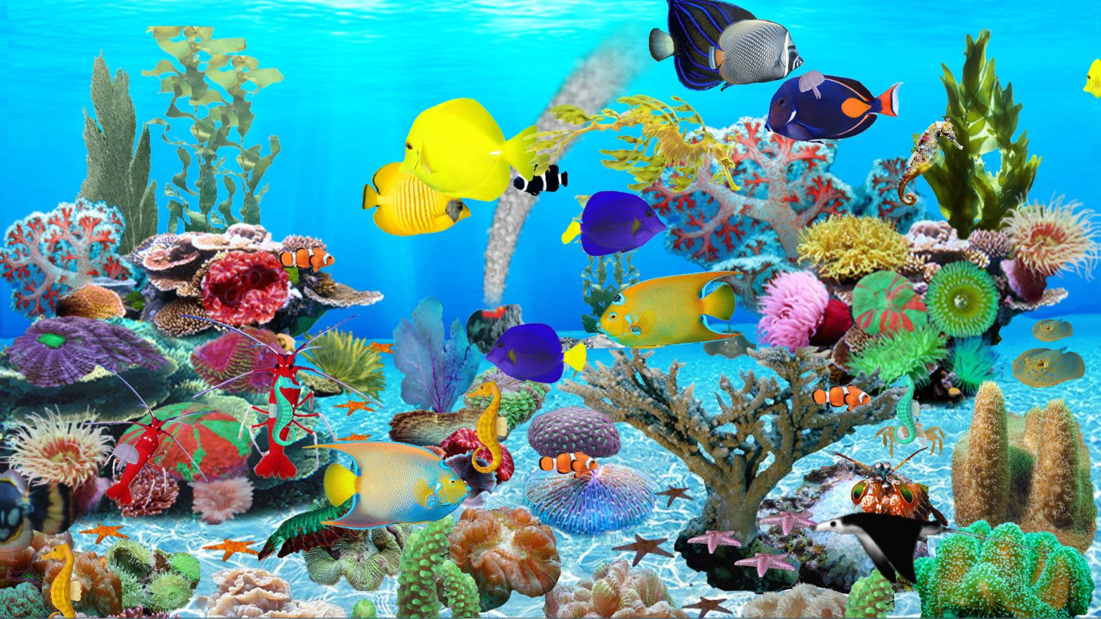 Blue ocean aquarium download for Fish tank screen