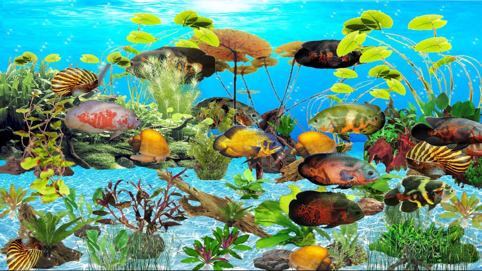 Tiger Oscar Aquarium 2.01
