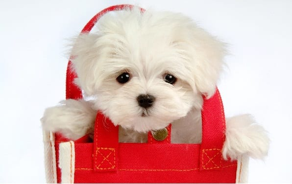 Cute Puppies Wallpapers HD Pack
