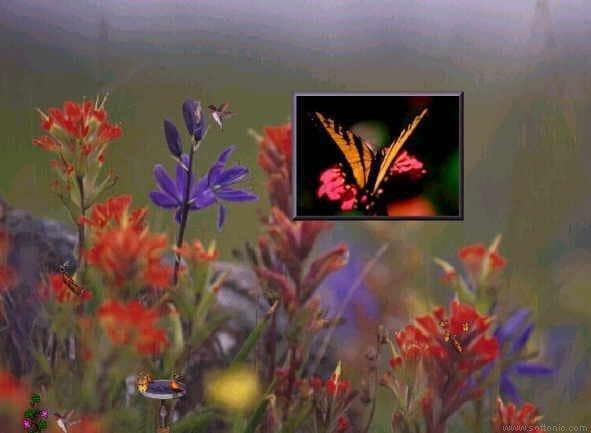 Butterfly-by Screen Saver