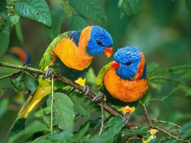 Bright Birds Free Screensaver