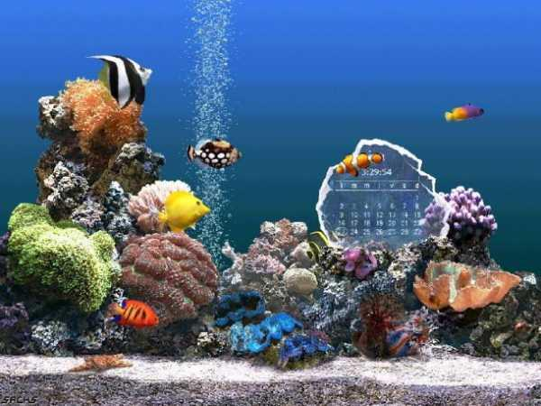 Serenescreen marine aquarium download for Fish tank screen