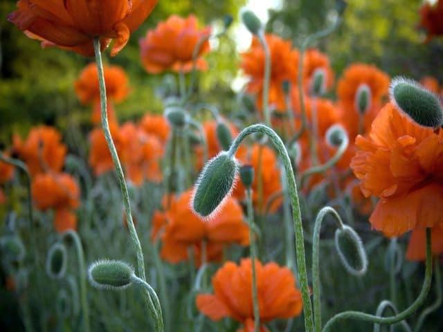 Spring Bloom Free Screensaver