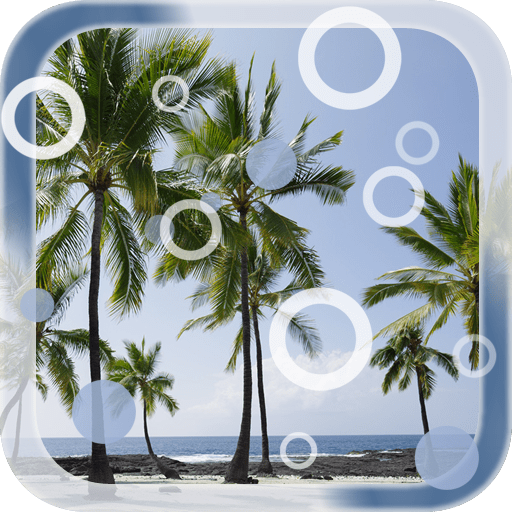Beach Palms Live Wallpaper