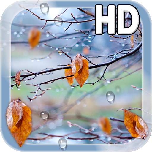 Autumn Raindrops Live HD
