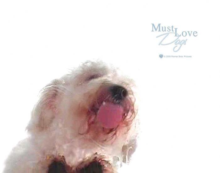 Dog Screen Cleaner screensaver