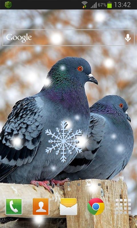 Birds Winter LWP
