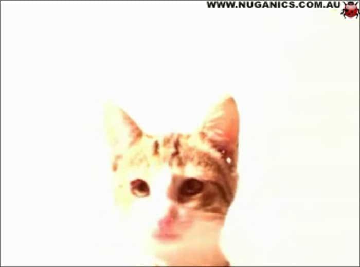 Cat Licking Screensaver