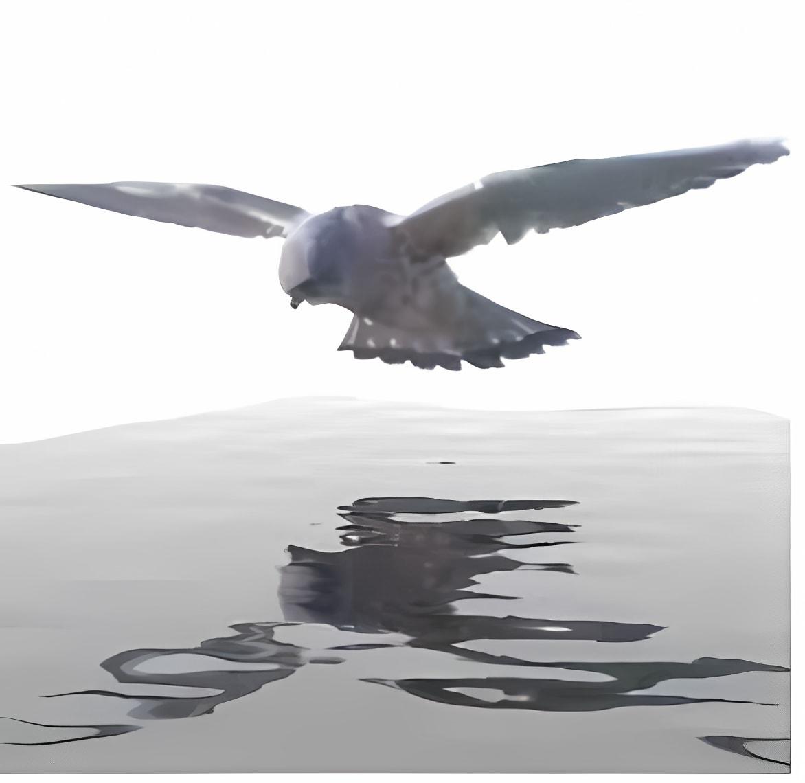 Sqirlz Water Reflections