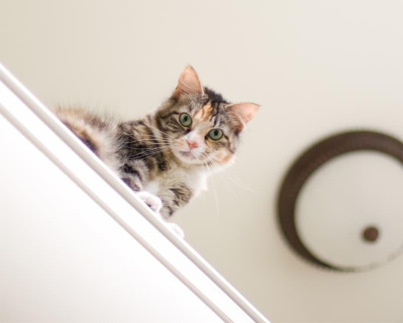 Tema Gatos em Qualquer Lugar