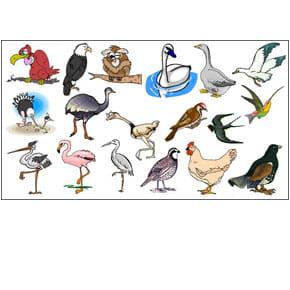Birds FX Collection