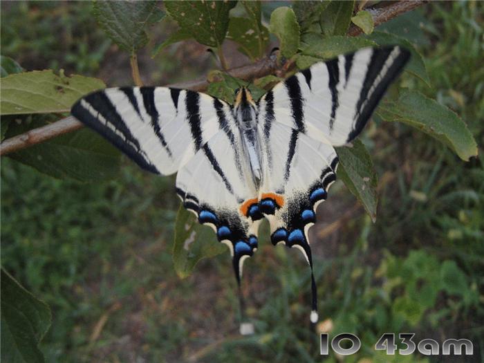 Graceful Butterflies Free Screensaver