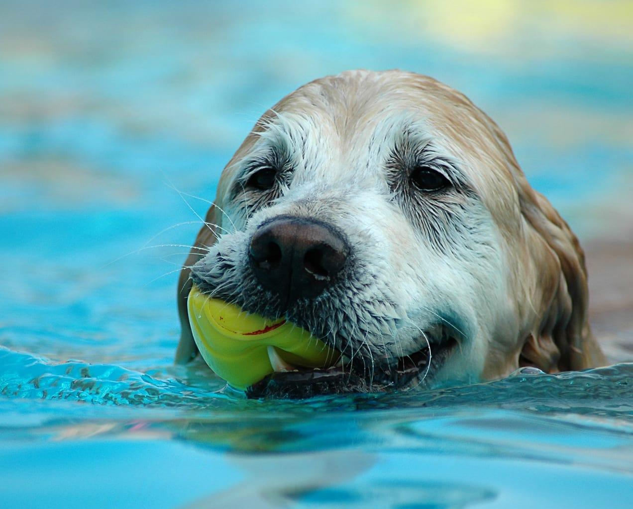 Tema Cães no Verão