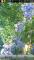 Sakura Live Wallpaper