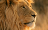 Mac OS X Lion Wallpapers