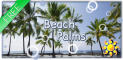 Beach Palms Live Wallpaper