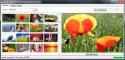 Flickr Mass Image Downloader