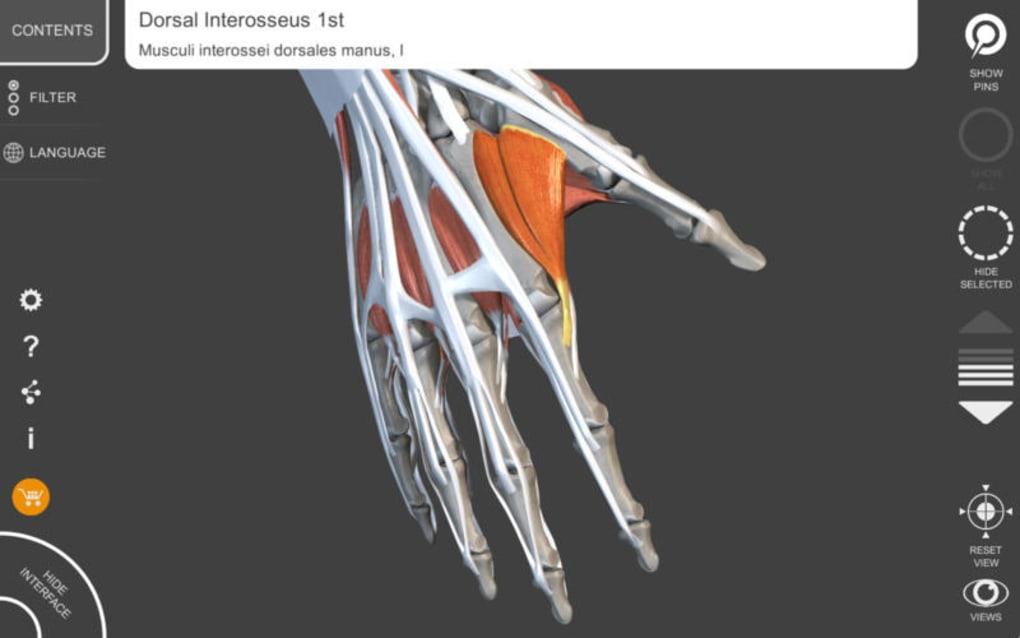 Muscular System Lite - Upper Limb - 3D Atlas of Anatomy for