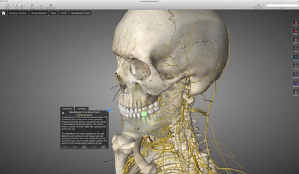 Essential Anatomy für Mac - Download