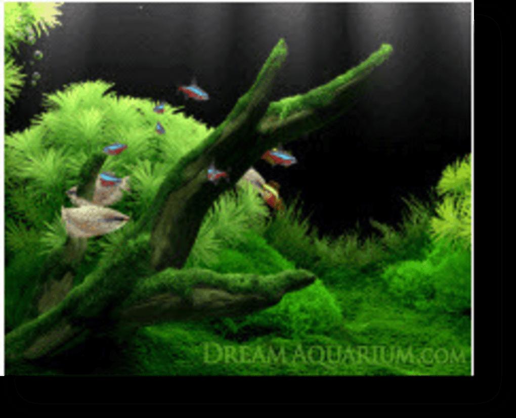 Dream aquarium wallpaper pour java t l charger for Fond ecran aquarium