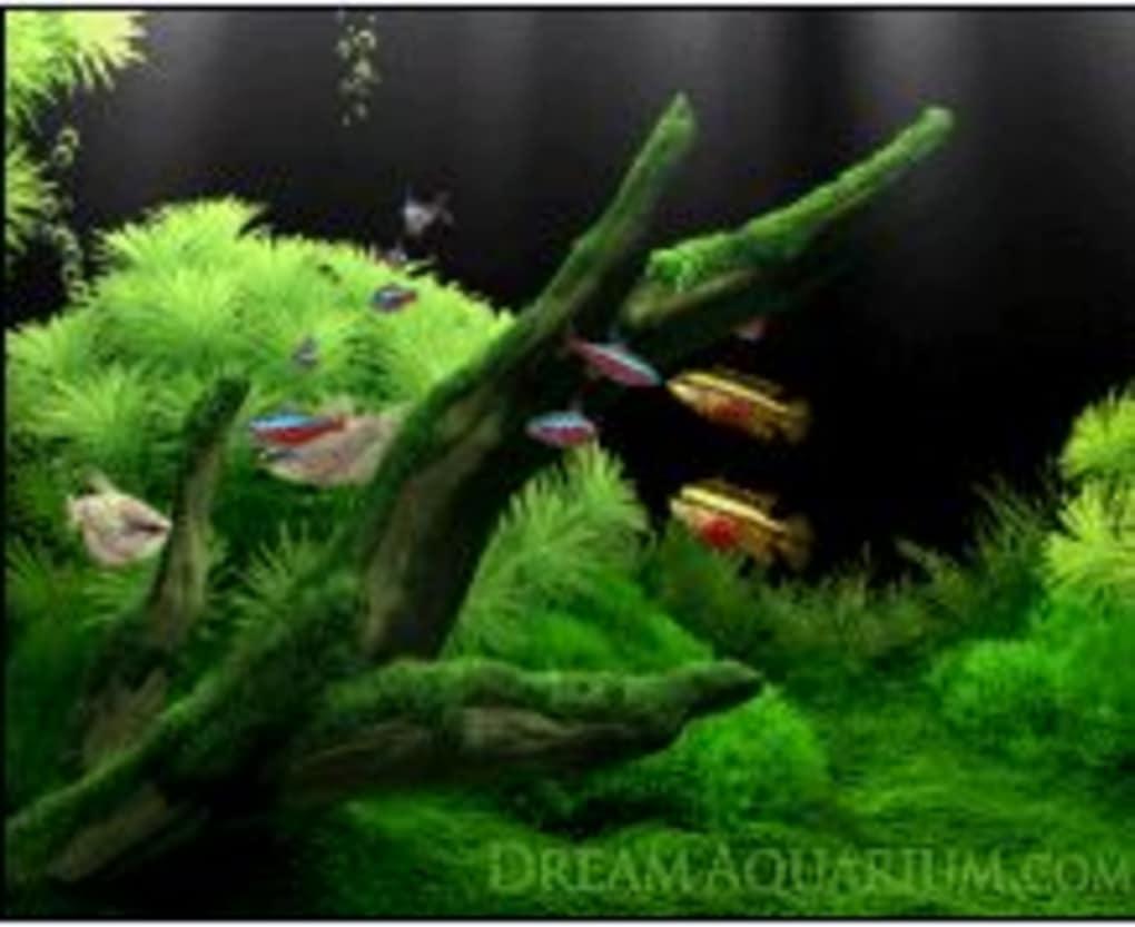 dream aquarium windows 7 full