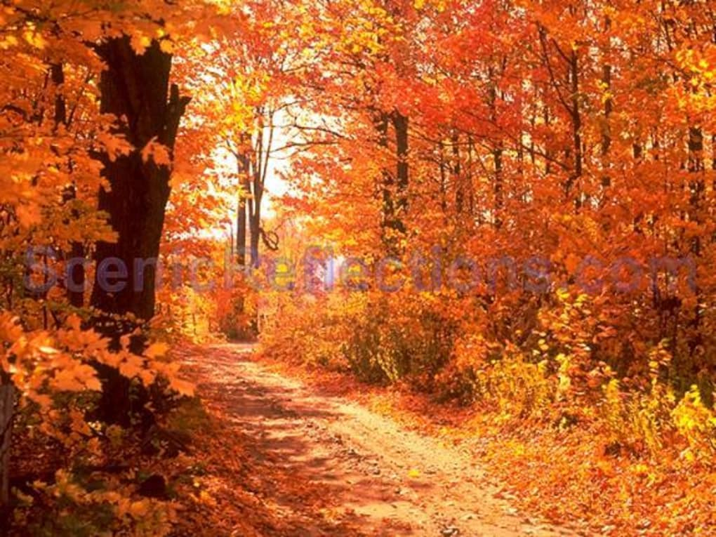 Admirable Colors Of Autumn Free Screensaver Download Home Interior And Landscaping Ologienasavecom