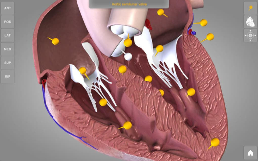 Heart - 3D Atlas of Anatomy Lite for Mac - Download